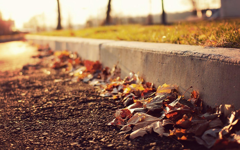 leaves-on-the-sidewalk-1440x900
